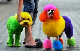 Colour dogs
